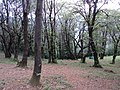 Bosco Ceduo - panoramio.jpg