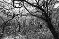 Bosque tupido seco.jpg