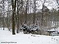 Botanic Garden in winter - panoramio.jpg