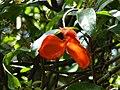 Botanical Garden of Peradeniya 71.JPG