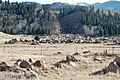 Boulder field from 1965 failed reservoir flood (Gillette Flats, Colorado, USA) 2.jpg