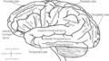 Brain-en.png