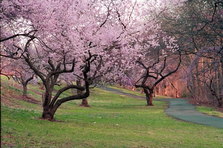 Branchbrook Park