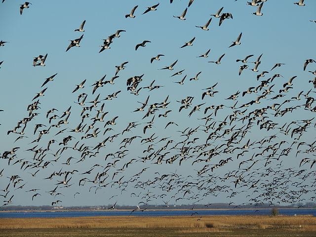 Fourteenth prize: Ezumakeeg, Lauwersmeer National Park, Netherlands | by Bayke de Vries (Baykedevries)