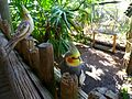 Brevard Zoo - Flickr - Rusty Clark (155).jpg