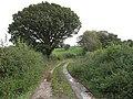 Bridleway to Llangwstenin - geograph.org.uk - 1013832.jpg