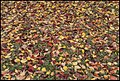 Bright Vic - Autumn Leaves have fallen-1 (41784763281).jpg