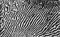 Britannica Alloys Plate Figure 11.jpg