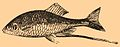 Brockhaus and Efron Encyclopedic Dictionary b17 346-0.jpg