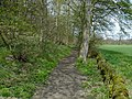 Bubnell - Footpath on eastern edge of St Mary's Wood - geograph.org.uk - 621055.jpg