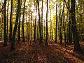 Buchenwälder im Nationalpark Jasmund.jpg