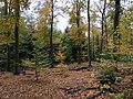 Buchenwald-Herbst-LSG-Düppeler-Forst.jpg