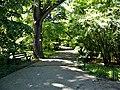 Bucuresti, Romania. GRADINA BOTANICA. Alee in parc. (B-II-a-B-18508).jpg