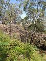 Budj Bim ‐ Mt Eccles National Park, Victoria, Australia 49.jpg