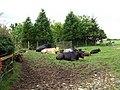 Bull in Field - geograph.org.uk - 1343048.jpg