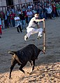 Bullfighting Cuts (139308605).jpeg