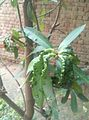 Bumps on leaf.jpg