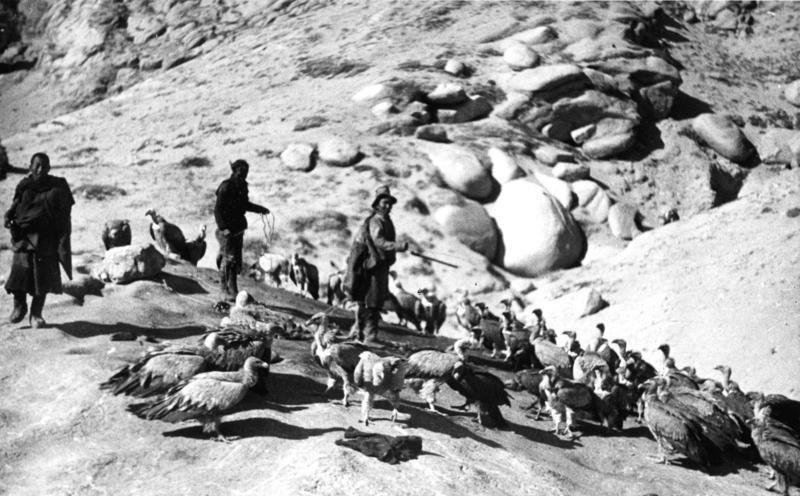 Bundesarchiv Bild 135-S-12-50-09, Tibetexpedition, Ragyapas, Geier