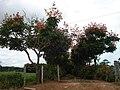 Buritana - Entrada de uma chácara (clique na foto) - panoramio.jpg