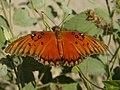 Butterfly (3976800025).jpg