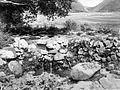 COLLECTIE TROPENMUSEUM 'De Bronsi Pitoe Dae (zeven smaken bron) te Limbong bij Samosir Noord-Sumatra de bron met mineraalhoudend water heeft zeven waterstralen die ieder een verschillende bitterzure smaak hebben' TMnr 10004351.jpg