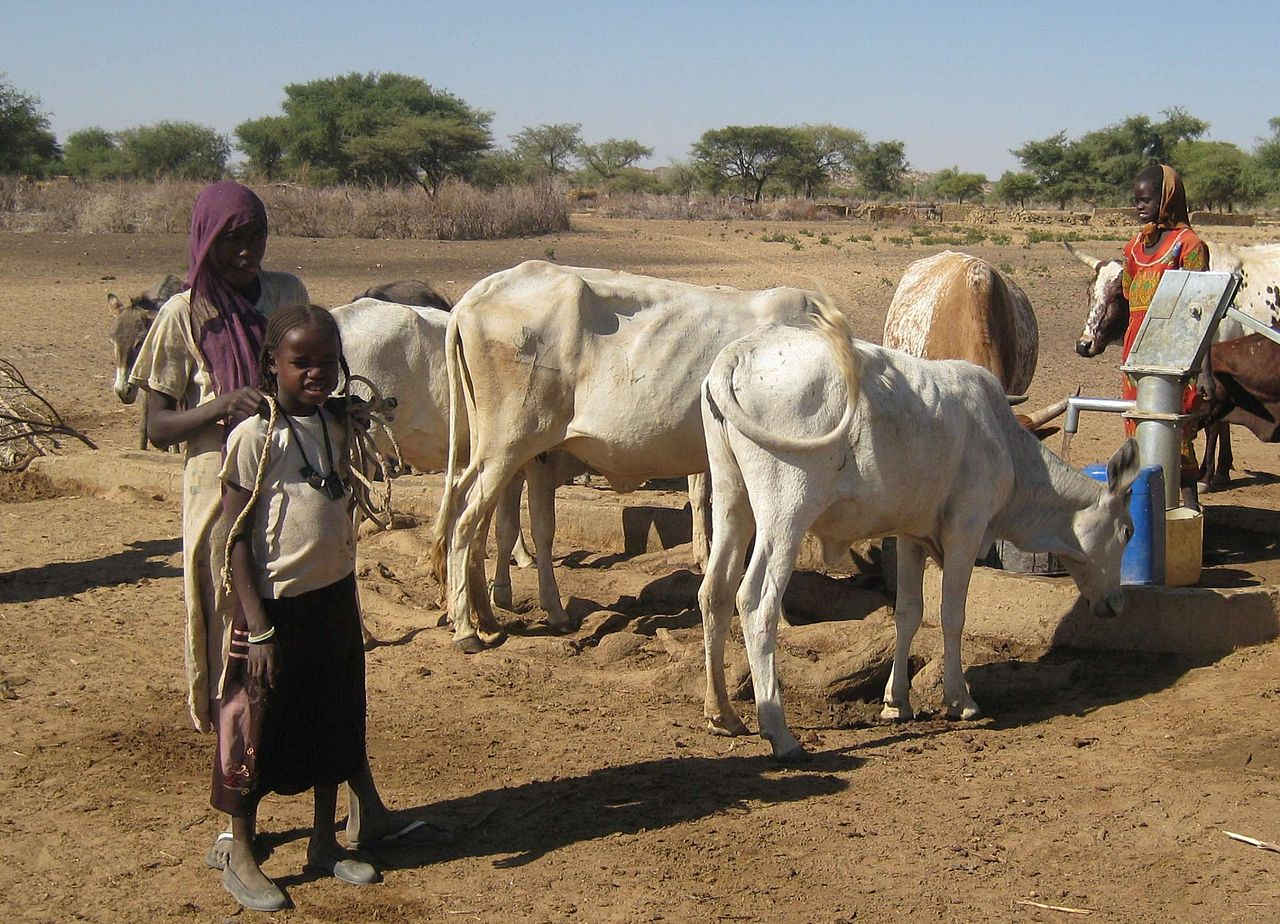 COSV - Darfur 2009 - Cattle watering.jpg