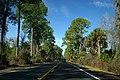 CR42wRoad1-TreeLined (29043245573).jpg