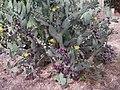 Cactus - panoramio (10).jpg