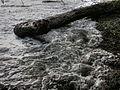 Cahuita beach 10.jpg