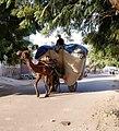 Camel cart in Lalgarh neighborhood, Bikaner.jpg