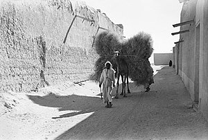 Mary Bruins Allison - Image: Camel in Kuwait carrying fuel for cooking (1938)