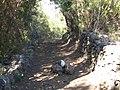 Camino - panoramio (21).jpg