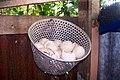 Canasta con cáscaras de huevos de gallina (1264896003) La Tigra, Alajuela, Costa Rica.jpg