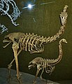 Canterbury Museum, Christchurch - Joy of Museums - Moa.jpg