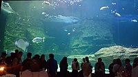 Cape Aquarium 20180719 211909 (6).jpg