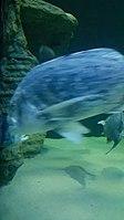 Cape Aquarium 20180719 211909 (9).jpg