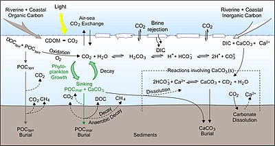 400px-Carbon_cycle_processes_in_high-lat