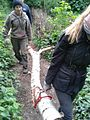 Carrying a birch log in Gunnersbury Triangle.jpg