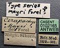Cerapachys mayri casent0102165 label 1.jpg
