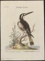 Ceryle rudis - 1700-1880 - Print - Iconographia Zoologica - Special Collections University of Amsterdam - UBA01 IZ16800243.tif