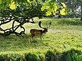 Charlecote park - panoramio (25).jpg