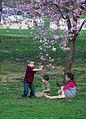 Cherry blossoms 0026 - Washington DC - 2014-04-10 (13783375133).jpg
