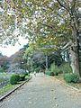 Chiba park in autumn.jpg