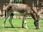 Chile Donkey.jpg