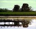 Common Terns at Loch Spynie - geograph.org.uk - 1408357.jpg