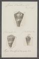 Conus vexillum - - Print - Iconographia Zoologica - Special Collections University of Amsterdam - UBAINV0274 086 08 0007.tif
