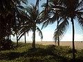Coqueiral - panoramio (1).jpg