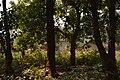Countryside - Sasapasi - Dhenkanal 2018-01-25 9353.JPG