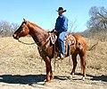 Cowboy in Missouri (USA).jpg