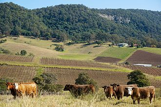 Hunter Region - A Hunter Valley vineyard